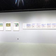 大美乌梁素海——鸟类生态艺术作品展